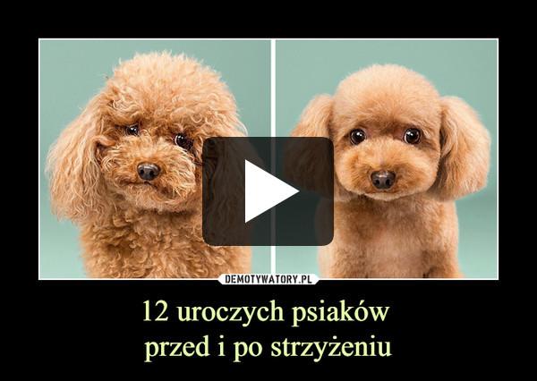 12 uroczych psiaków przed i po strzyżeniu –