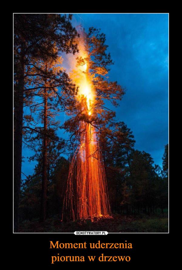 Moment uderzeniapioruna w drzewo –