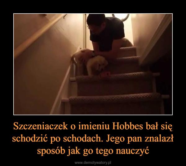 Szczeniaczek o imieniu Hobbes bał się schodzić po schodach. Jego pan znalazł sposób jak go tego nauczyć –