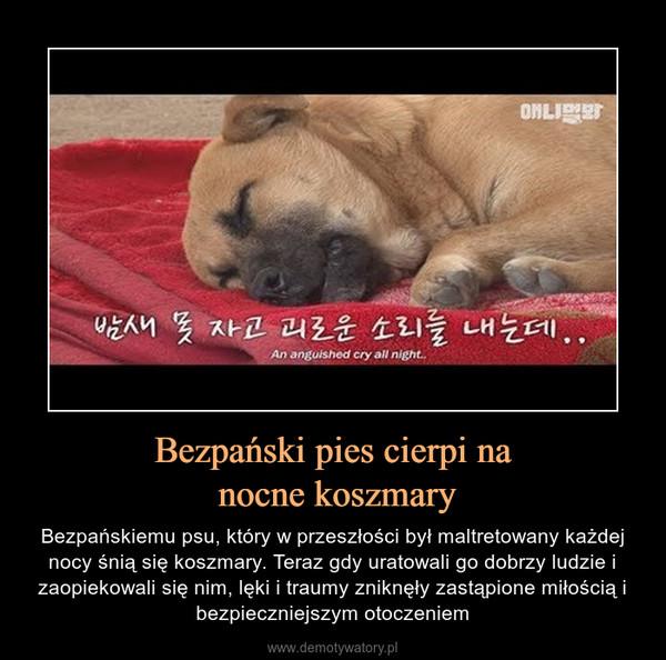 Bezpański pies cierpi na nocne koszmary – Bezpańskiemu psu, który w przeszłości był maltretowany każdej nocy śnią się koszmary. Teraz gdy uratowali go dobrzy ludzie i zaopiekowali się nim, lęki i traumy zniknęły zastąpione miłością i bezpieczniejszym otoczeniem