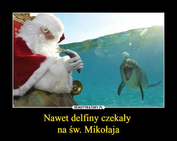Nawet delfiny czekały na św. Mikołaja –
