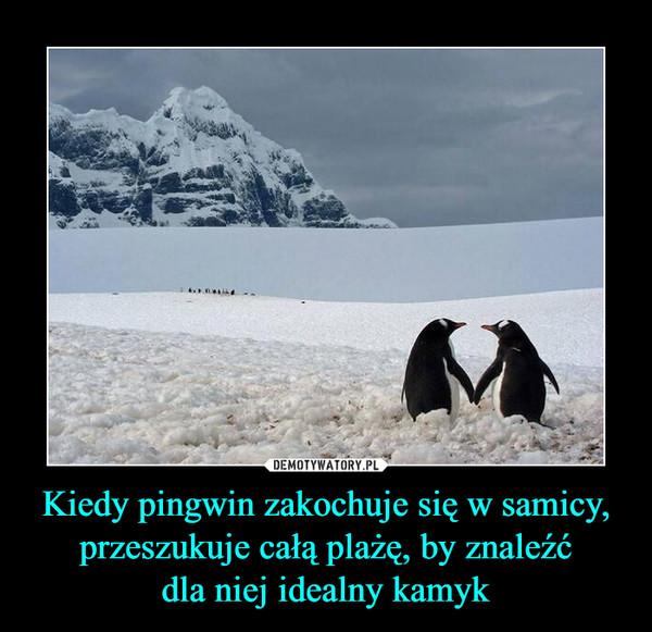 Kiedy pingwin zakochuje się w samicy, przeszukuje całą plażę, by znaleźćdla niej idealny kamyk –