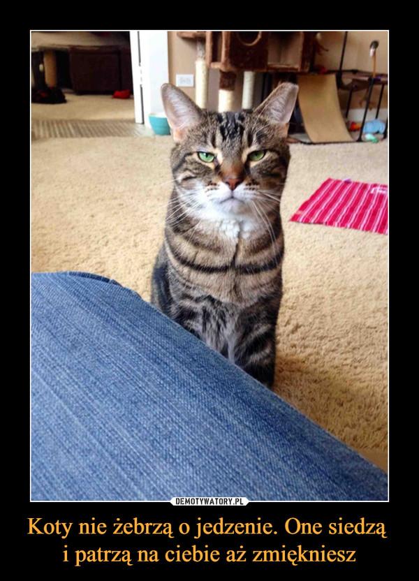 Koty nie żebrzą o jedzenie. One siedzą  i patrzą na ciebie aż zmiękniesz