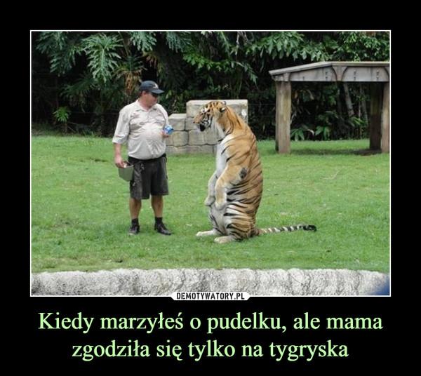 Kiedy marzyłeś o pudelku, ale mama zgodziła się tylko na tygryska –