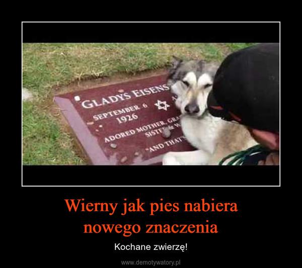 Wierny jak pies nabieranowego znaczenia – Kochane zwierzę!