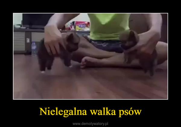 Nielegalna walka psów –
