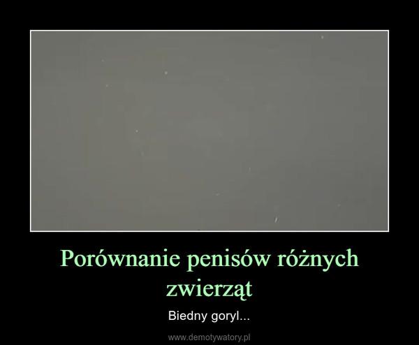Porównanie penisów różnych zwierząt – Biedny goryl...