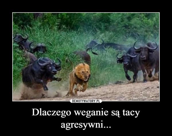 Dlaczego weganie są tacy agresywni... –