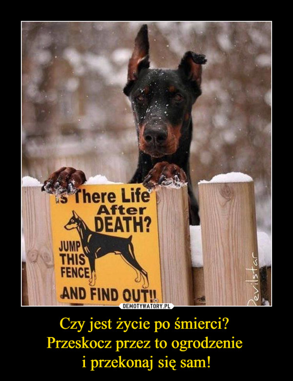 Czy jest życie po śmierci? Przeskocz przez to ogrodzenie i przekonaj się sam! –  There Life After DEATH?JUMP THIS FENCE AND FIND OUT!