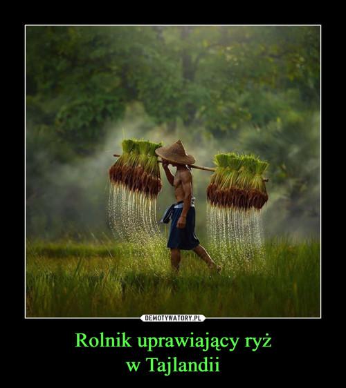 Rolnik uprawiający ryż w Tajlandii