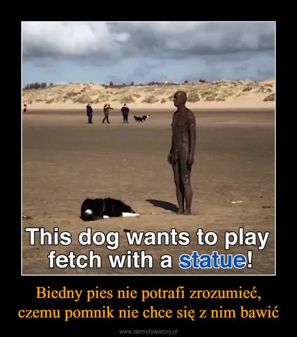 Biedny pies nie potrafi zrozumieć, czemu pomnik nie chce się z nim bawić –