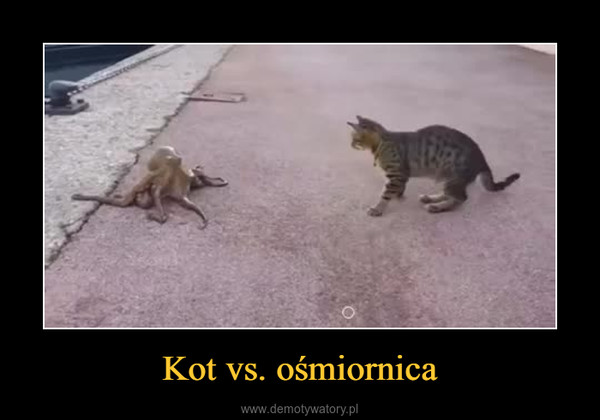 Kot vs. ośmiornica –