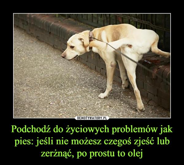 Podchodź do życiowych problemów jak pies: jeśli nie możesz czegoś zjeść lub zerżnąć, po prostu to olej –