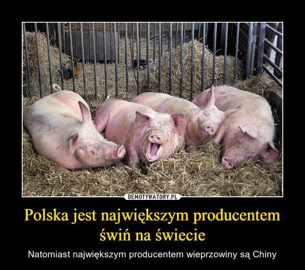 Polska jest największym producentem świń na świecie – Natomiast największym producentem wieprzowiny są Chiny