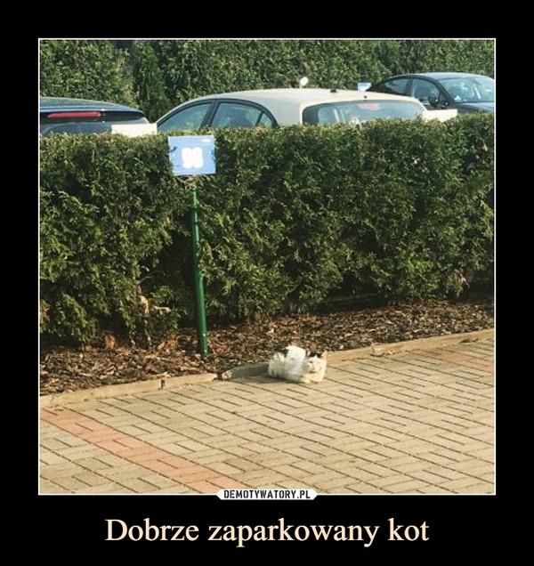 Dobrze zaparkowany kot –