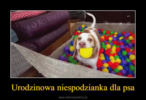 Urodzinowa niespodzianka dla psa –
