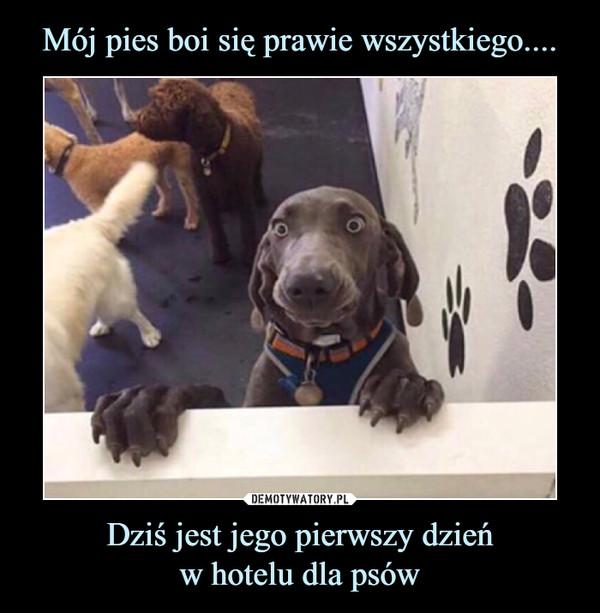 Dziś jest jego pierwszy dzieńw hotelu dla psów –