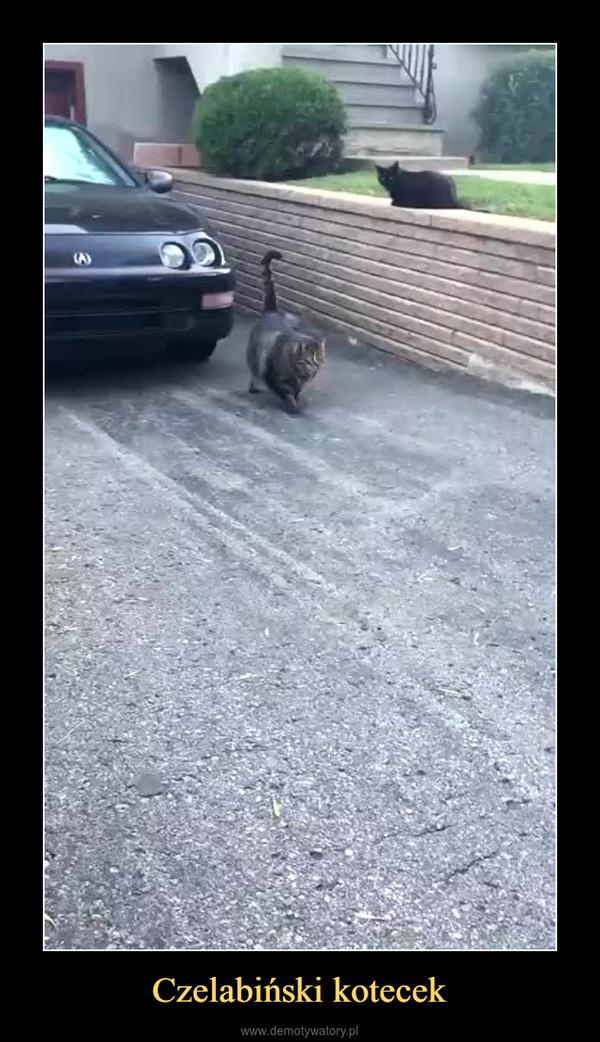 Czelabiński kotecek –