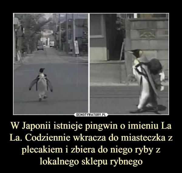 W Japonii istnieje pingwin o imieniu La La. Codziennie wkracza do miasteczka z plecakiem i zbiera do niego ryby z lokalnego sklepu rybnego –