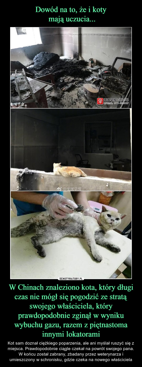 W Chinach znaleziono kota, który długi czas nie mógł się pogodzić ze stratą swojego właściciela, który prawdopodobnie zginął w wyniku wybuchu gazu, razem z piętnastoma innymi lokatorami – Kot sam doznał ciężkiego poparzenia, ale ani myślał ruszyć się z miejsca. Prawdopodobnie ciągle czekał na powrót swojego pana. W końcu został zabrany, zbadany przez weterynarza i umieszczony w schronisku, gdzie czeka na nowego właściciela