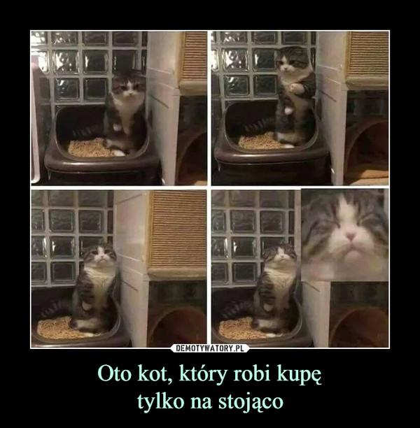 Oto kot, który robi kupętylko na stojąco –