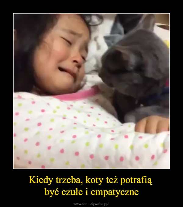 Kiedy trzeba, koty też potrafią być czułe i empatyczne –