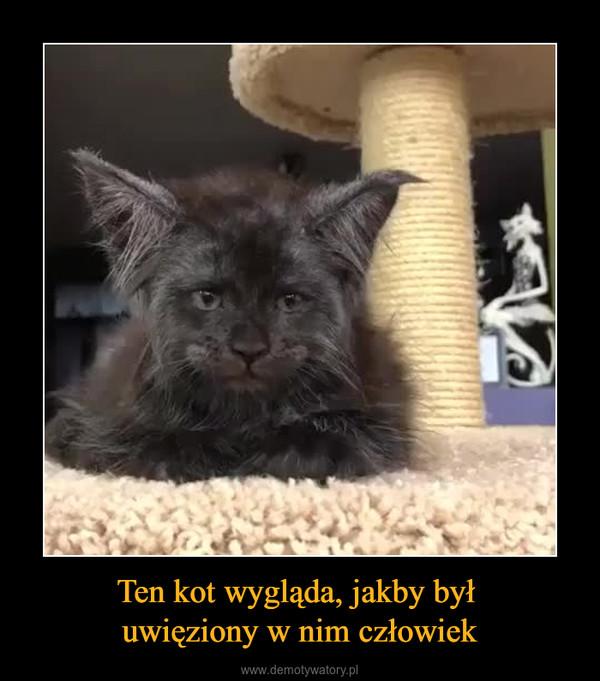 Ten kot wygląda, jakby był uwięziony w nim człowiek –