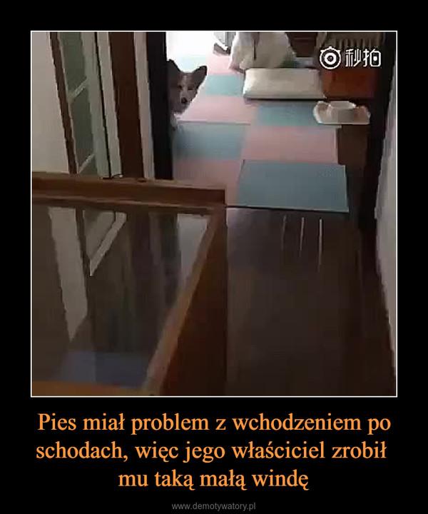 Pies miał problem z wchodzeniem po schodach, więc jego właściciel zrobił mu taką małą windę –