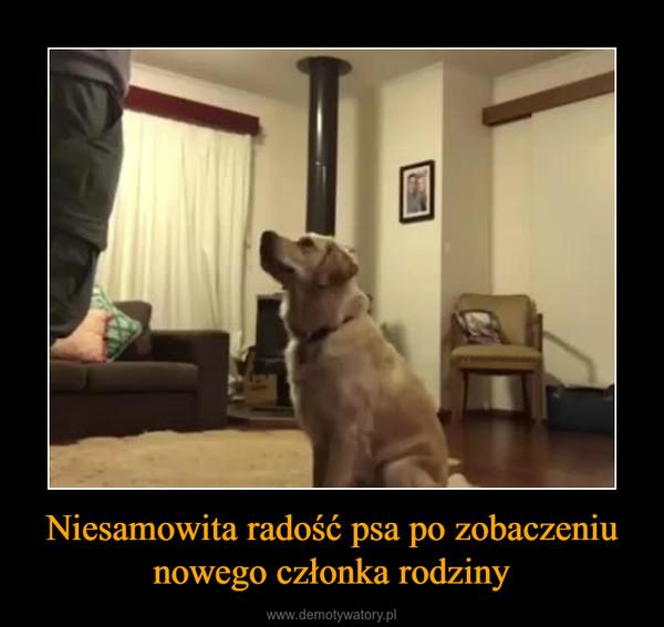 Niesamowita radość psa po zobaczeniu nowego członka rodziny –
