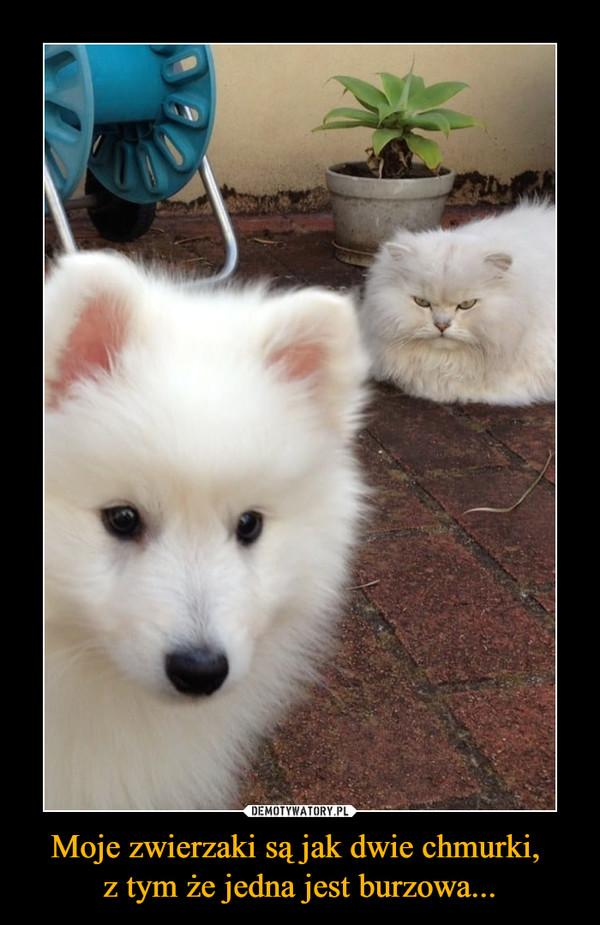 Moje zwierzaki są jak dwie chmurki, z tym że jedna jest burzowa... –