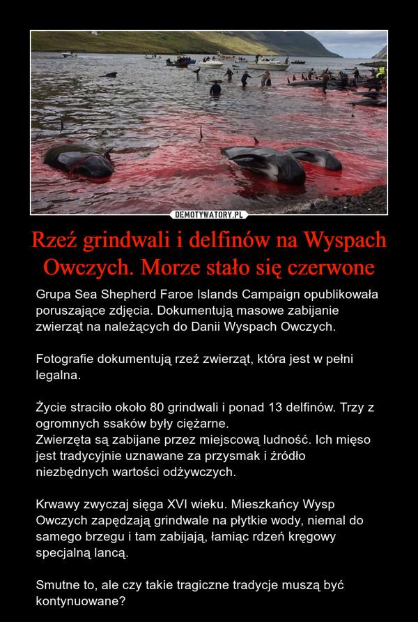 Rzeź grindwali i delfinów na Wyspach Owczych. Morze stało się czerwone – Grupa Sea Shepherd Faroe Islands Campaign opublikowała poruszające zdjęcia. Dokumentują masowe zabijanie zwierząt na należących do Danii Wyspach Owczych.Fotografie dokumentują rzeź zwierząt, która jest w pełni legalna.Życie straciło około 80 grindwali i ponad 13 delfinów. Trzy z ogromnych ssaków były ciężarne.Zwierzęta są zabijane przez miejscową ludność. Ich mięso jest tradycyjnie uznawane za przysmak i źródło niezbędnych wartości odżywczych.Krwawy zwyczaj sięga XVI wieku. Mieszkańcy Wysp Owczych zapędzają grindwale na płytkie wody, niemal do samego brzegu i tam zabijają, łamiąc rdzeń kręgowy specjalną lancą.Smutne to, ale czy takie tragiczne tradycje muszą być kontynuowane?