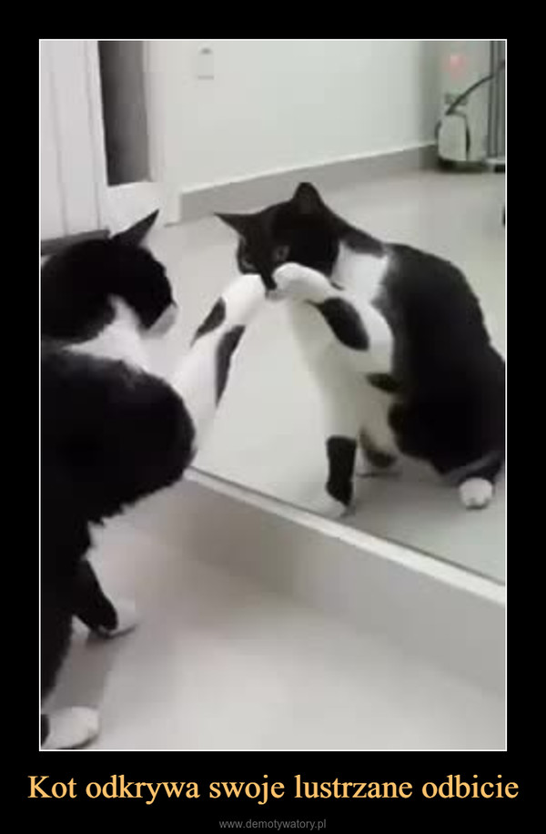 Kot odkrywa swoje lustrzane odbicie –