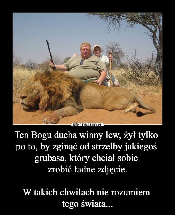Ten Bogu ducha winny lew, żył tylko  po to, by zginąć od strzelby jakiegoś  grubasa, który chciał sobie  zrobić ładne zdjęcie.  W takich chwilach nie rozumiem  tego świata...