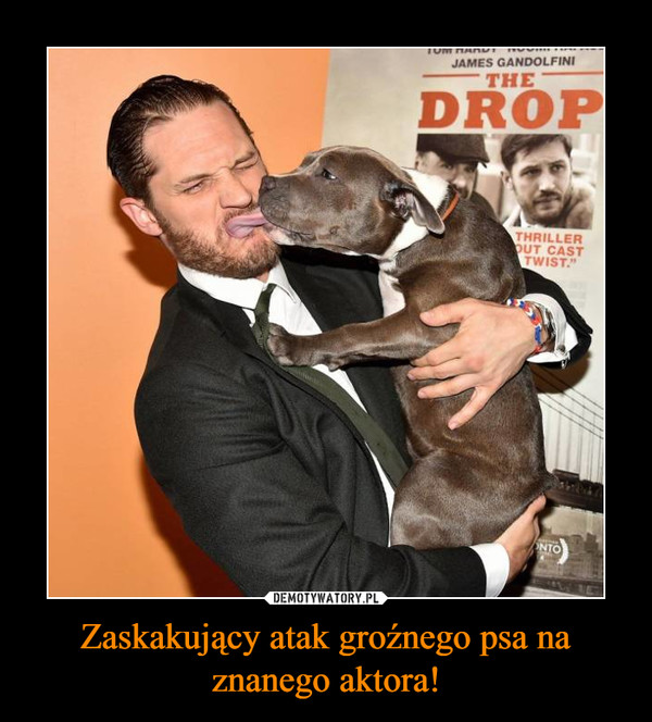 Zaskakujący atak groźnego psa na znanego aktora! –