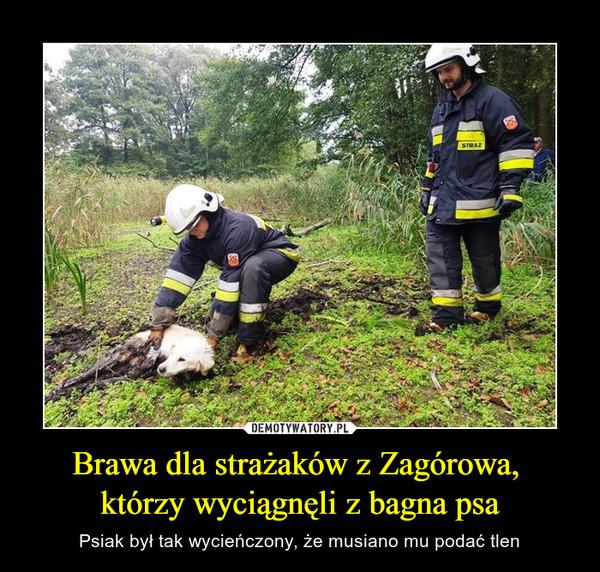 Brawa dla strażaków z Zagórowa, którzy wyciągnęli z bagna psa – Psiak był tak wycieńczony, że musiano mu podać tlen
