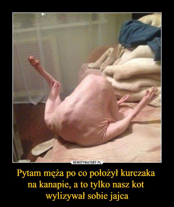 Pytam męża po co położył kurczaka na kanapie, a to tylko nasz kot wylizywał sobie jajca –