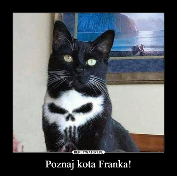 Poznaj kota Franka! –