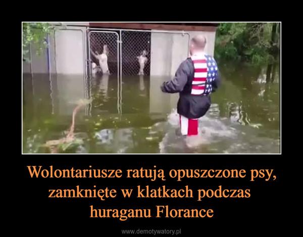 Wolontariusze ratują opuszczone psy, zamknięte w klatkach podczas huraganu Florance –