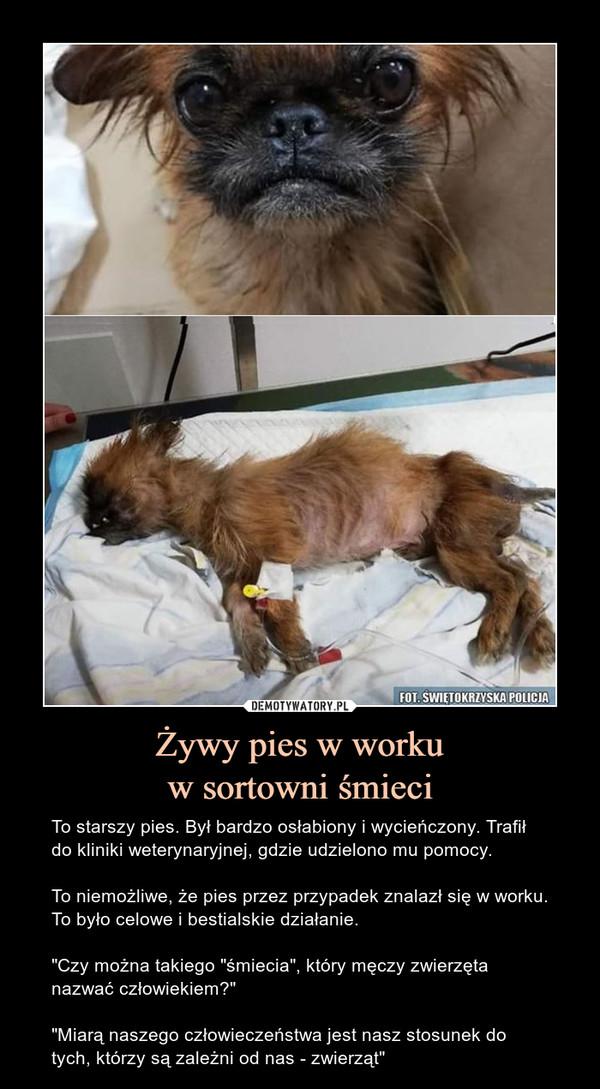 """Żywy pies w workuw sortowni śmieci – To starszy pies. Był bardzo osłabiony i wycieńczony. Trafił do kliniki weterynaryjnej, gdzie udzielono mu pomocy.To niemożliwe, że pies przez przypadek znalazł się w worku. To było celowe i bestialskie działanie.""""Czy można takiego """"śmiecia"""", który męczy zwierzęta nazwać człowiekiem?""""""""Miarą naszego człowieczeństwa jest nasz stosunek do tych, którzy są zależni od nas - zwierząt"""""""