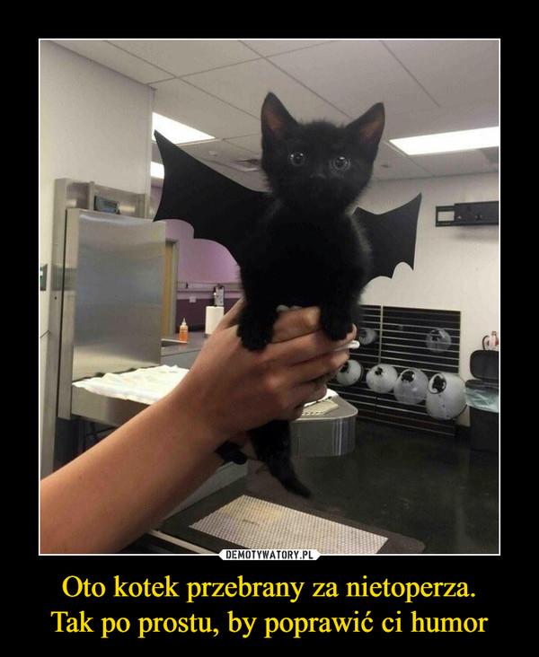 Oto kotek przebrany za nietoperza.Tak po prostu, by poprawić ci humor –