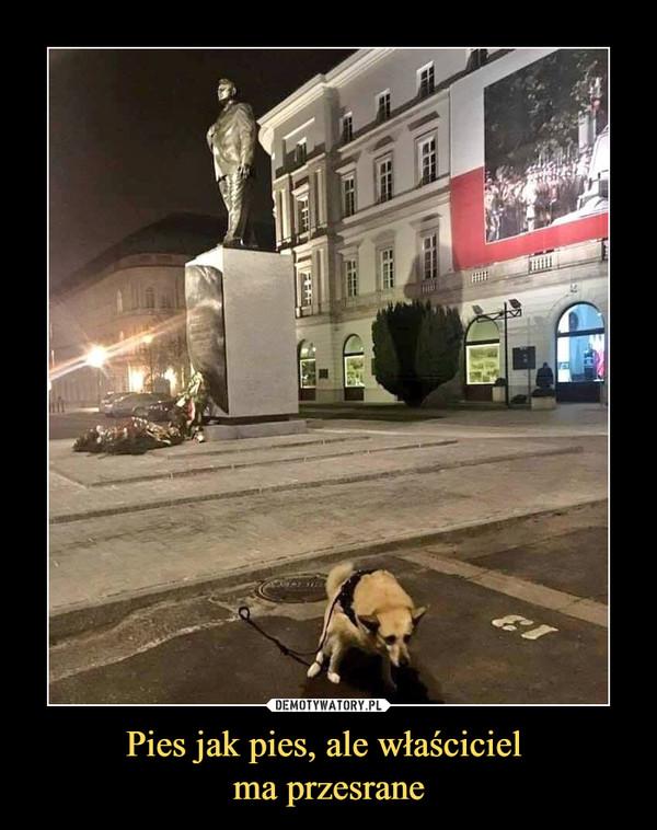 Pies jak pies, ale właściciel ma przesrane –