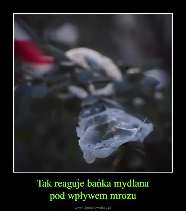 Tak reaguje bańka mydlanapod wpływem mrozu –