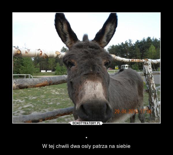 . – W tej chwili dwa osly patrza na siebie