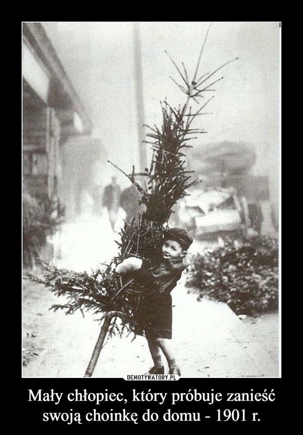 Mały chłopiec, który próbuje zanieść swoją choinkę do domu - 1901 r. –