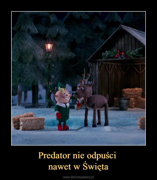 Predator nie odpuści nawet w Święta –