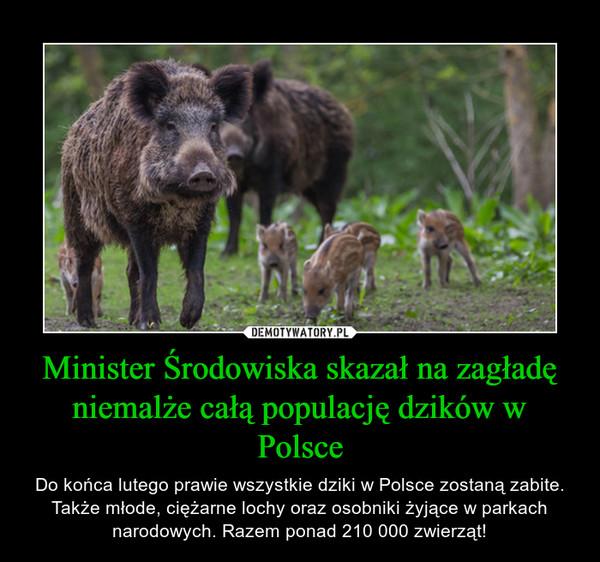 Minister Środowiska skazał na zagładę niemalże całą populację dzików w Polsce – Do końca lutego prawie wszystkie dziki w Polsce zostaną zabite. Także młode, ciężarne lochy oraz osobniki żyjące w parkach narodowych. Razem ponad 210 000 zwierząt!