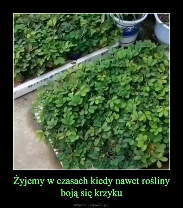 Żyjemy w czasach kiedy nawet rośliny boją się krzyku –