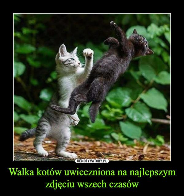 Walka kotów uwieczniona na najlepszym zdjęciu wszech czasów –