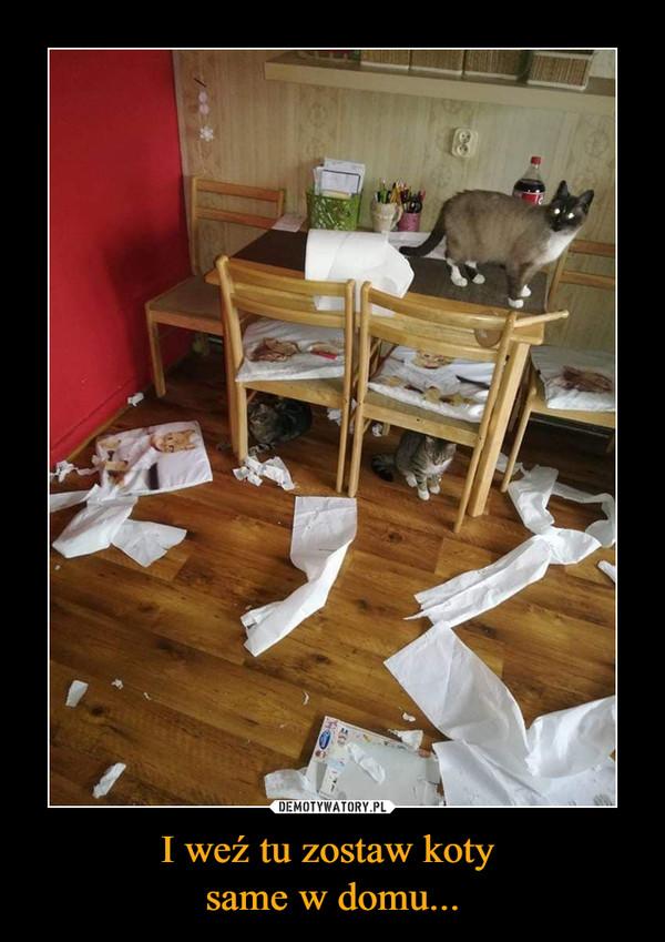 I weź tu zostaw koty same w domu... –