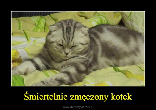 Śmiertelnie zmęczony kotek –